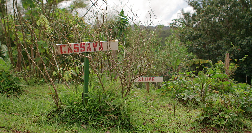 Cassava Planted veg sign, Grand Etang National Park, Grenada, West Indies, Caribbean, Central America