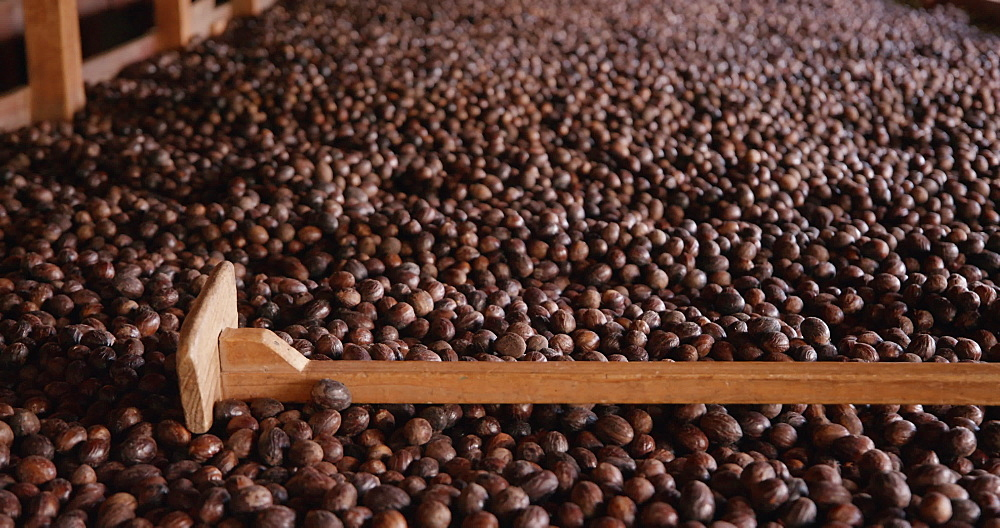 Nutmeg, Gouyave Nutmeg Processing Plant, Gouyave, Grenada, West Indies, Caribbean, Central America - 1239-225