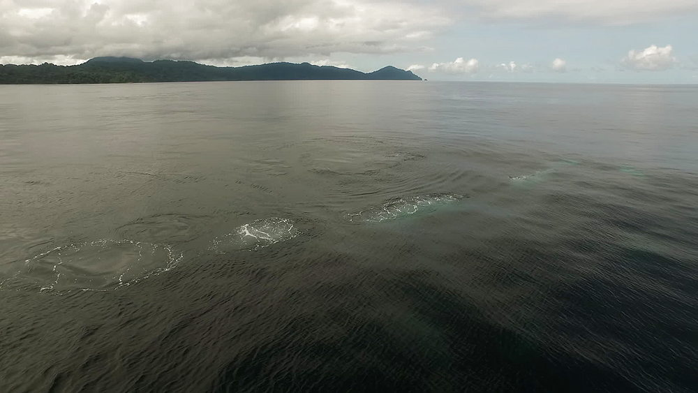 Drone aerial of humpback whales surfacing, off of Chocó, Colombia