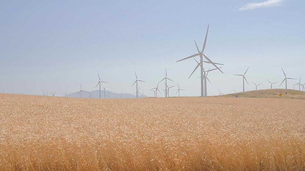 View of wind generator farm near Moccasin, California, United States of America, North America