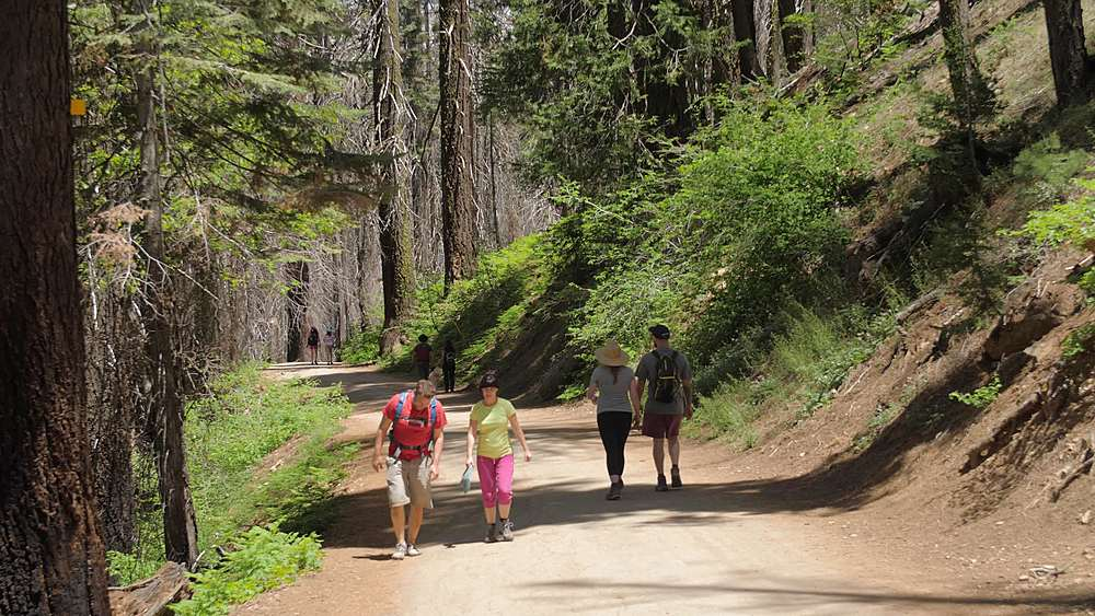 Tourists walking down the Big Oak Flat road at Tuolumne Grove, Yosemite Valley, UNESCO World Heritage Site, California