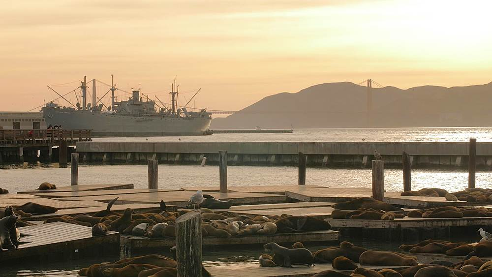 Sea Lions on Pier 39 in Fishermans Wharf at sunset, San Francisco, California, United States of America, North America - 1276-1358