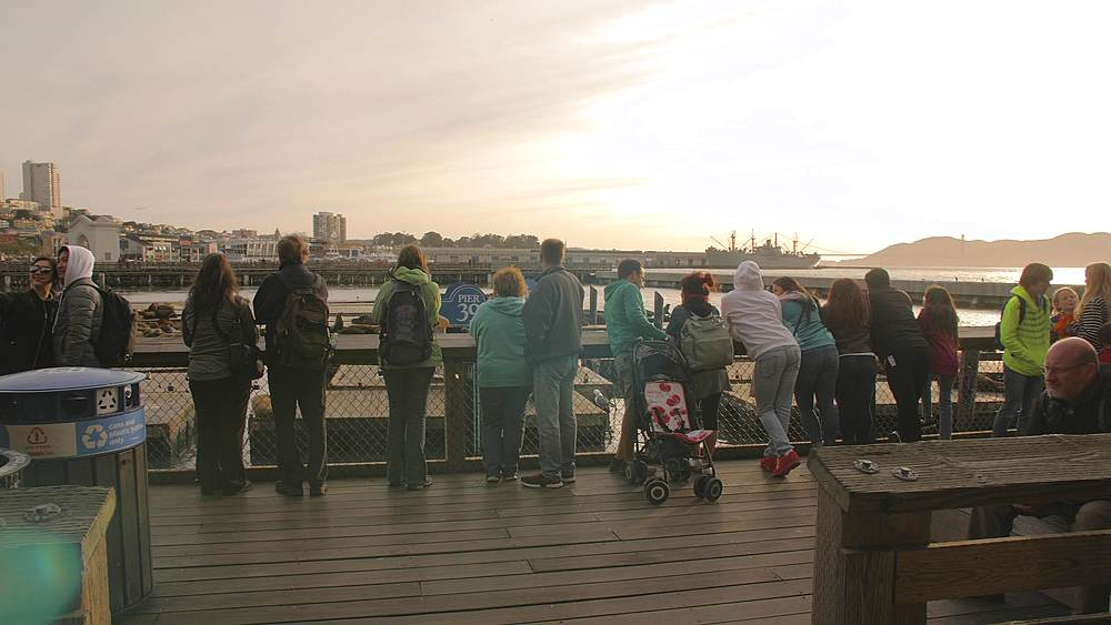 Tourists looking at Sea Lions on Pier 39 in Fishermans Wharf at sunset, San Francisco, California, United States of America, North America - 1276-1361