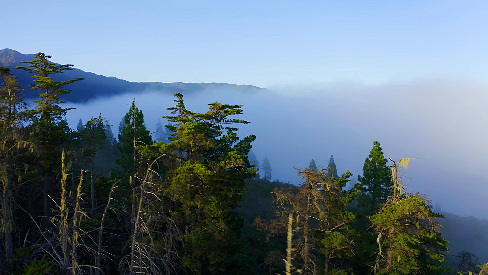 Drone view of foggy pine trees at Windows at the Guimar (ThoUSAnd Windows hike), Tenerife, Canary Islands, Spain, Atlantic, Europe