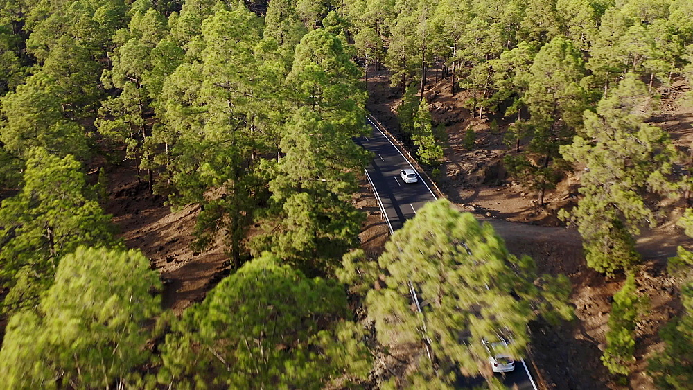Drone view of a cars driving at high speed through pine forest in Teide National Park, Tenerife, Canary Islands, Spain, Atlantic, Europe