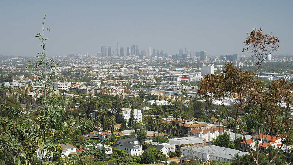 View of Downtown and Hollywood from Hollywood Hills, Hollywood, Los Angeles, LA, California, United States of America, North America - 1276-894