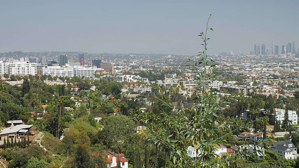 View of Downtown and Hollywood from Hollywood Hills, Hollywood, Los Angeles, LA, California, United States of America, North America - 1276-895