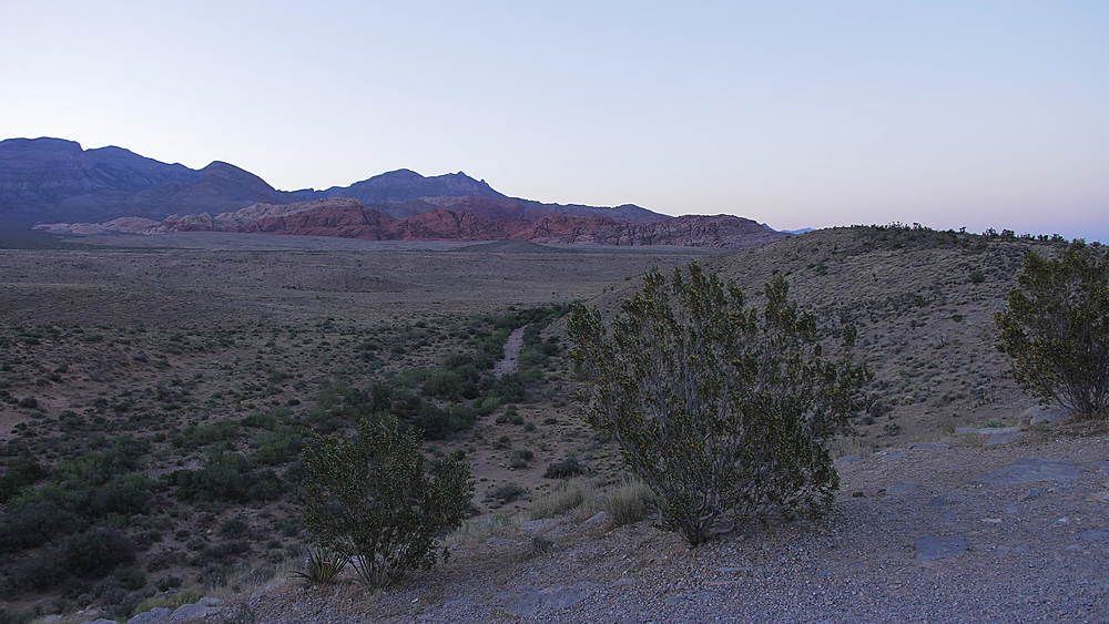 View of flora and mountains in Red Rock Canyon National Conservation Area at dusk, Nevada, USA, North America - 1276-972