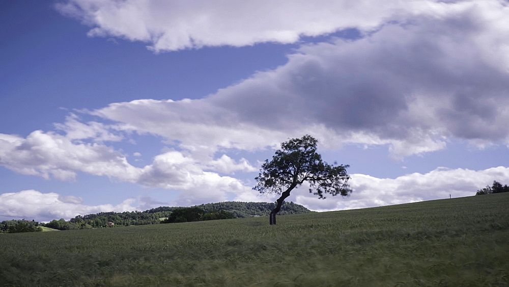 Time lapse of clouds over a countryside landscape with a lonely tree in a wheat field, Emilia Romagna, Italy, Europe