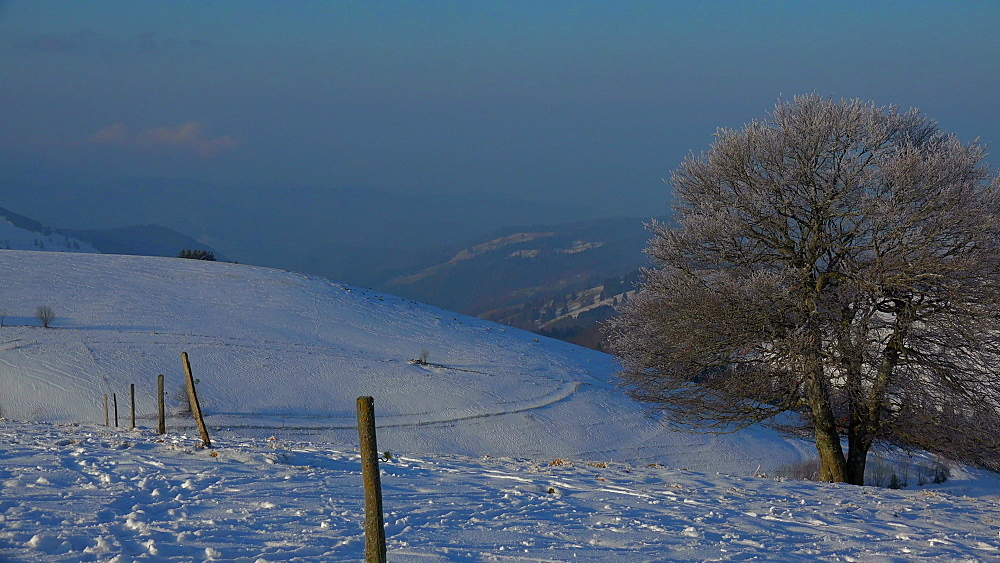 View of Schauinsland Mountain near Freiburg to the Muenstertal in winter, South Black Forest, Schwarzwald, Baden-Wuerttemberg, Germany - 396-10172