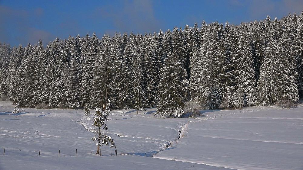 Winter landscape near Thurner, South Black Forest, Schwarzwald, Baden-Wuerttemberg, Germany - 396-10201