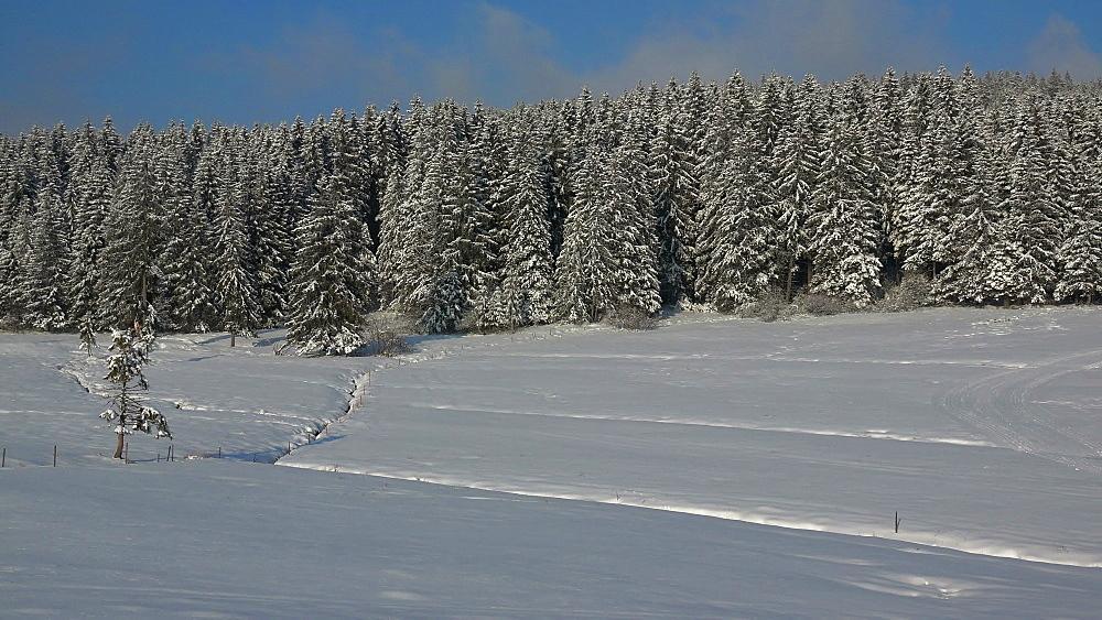 Winter landscape near Thurner, South Black Forest, Schwarzwald, Baden-Wurttemberg, Germany, Europe - 396-10202