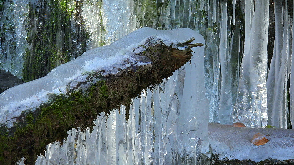 Icicles and ice sculptures at little forest brook, Taben Primeral Forest, Taben-Rodt, Saar Valley, Rhineland-Palatinate, Germany - 396-10235