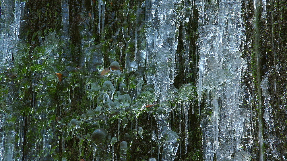Icicles and ice sculptures at little forest brook, Taben Primeral Forest, Taben-Rodt, Saar Valley, Rhineland-Palatinate, Germany - 396-10239