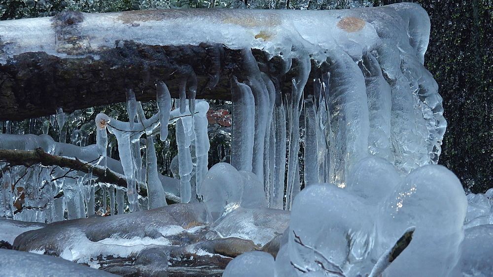 Icicles and ice sculptures at little forest brook, Taben Primeral Forest, Taben-Rodt, Saar Valley, Rhineland-Palatinate, Germany - 396-10244