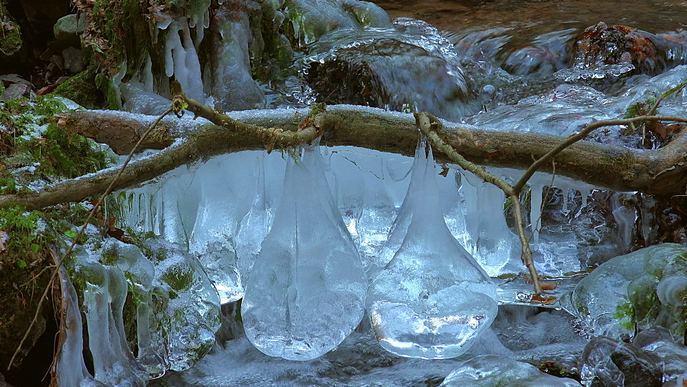 Ice sculptures at Wenichbach Brook in the natural forest Tabener Urwald (Taben Primeral Forest), Taben-Rodt, Rhineland-Palatinate, Germany - 396-10255