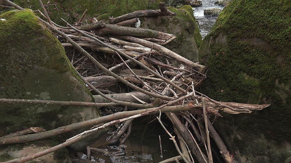 Driftwood of Pruem river at Irrel Waterfalls, South Eifel, Rhineland-Palatinate, Germany, Europe - 396-10272