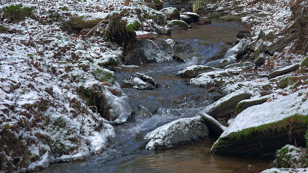 Little brook in forest in winter, Rhineland-Palatinate, Germany, Europe