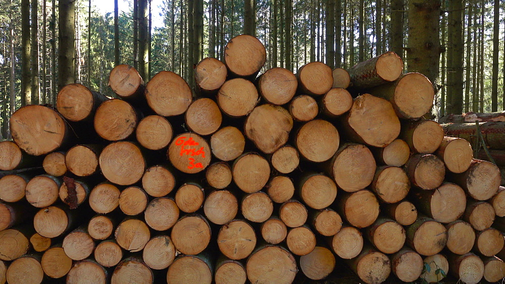 Stacked spruce trunks in forest, Mettlach, Saarland, Germany, Europe