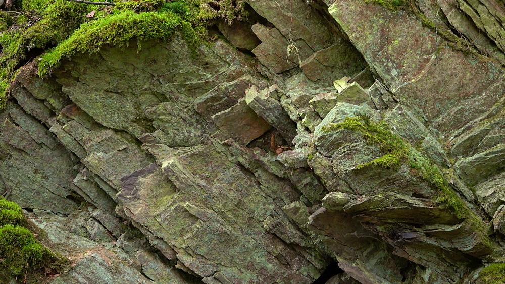 Moss on quartzite rocks, Rhineland-Palatinate, Germany, Europe - 396-10329
