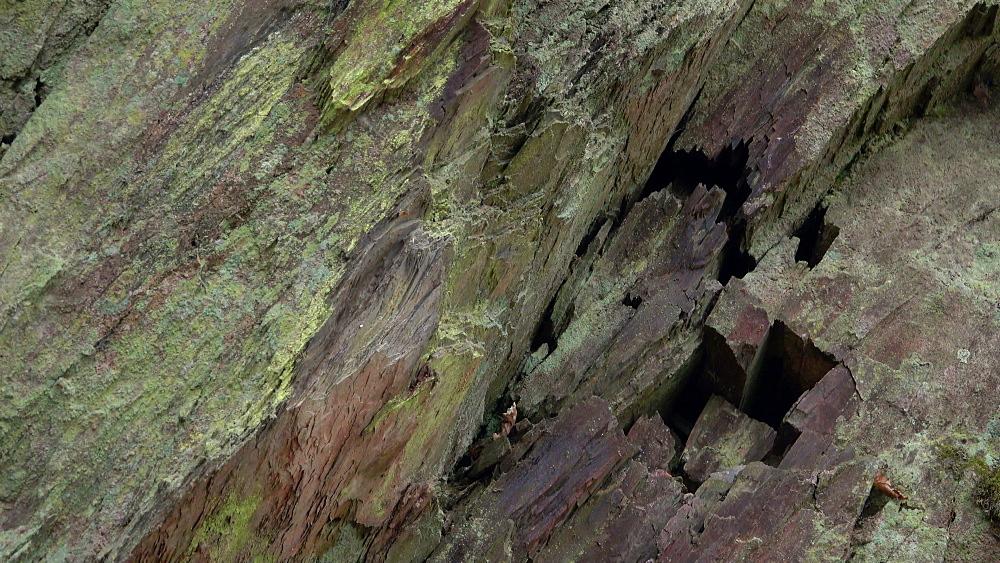 Moss on quartzite rocks, Rhineland-Palatinate, Germany, Europe - 396-10330