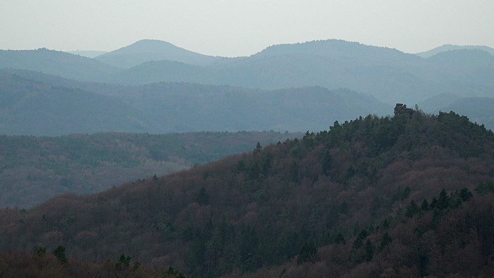 Palatinate Forest near Annweiler, Rhineland-Palatinate, Germany, Europe