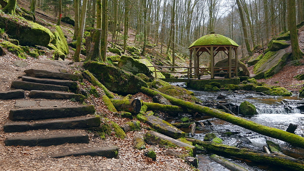 Moosalb brook in the Karlstal Valley near Trippstadt, Palatinate Forest, Rhineland-Palatinate, Germany, Europe - 396-10434