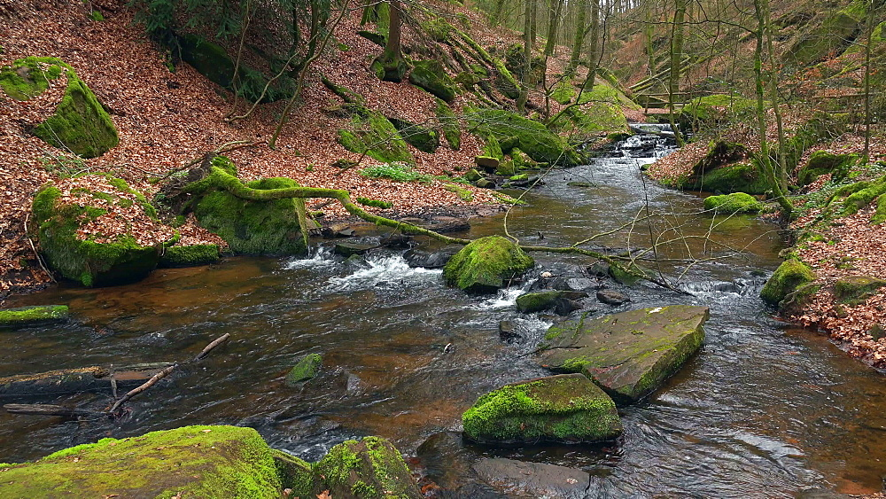 Moosalb brook in the Karlstal Valley near Trippstadt, Palatinate Forest, Rhineland-Palatinate, Germany, Europe - 396-10437