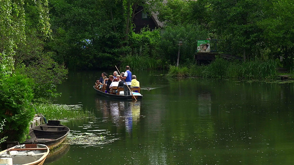 Boat tour on Spree River near Luebbenau, Spreewald, Brandenburg, Germany, Europe
