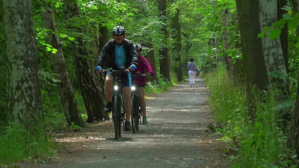 Spreewald Forest near Luebbenau, Spreewald, Brandenburg, Germany, Europe