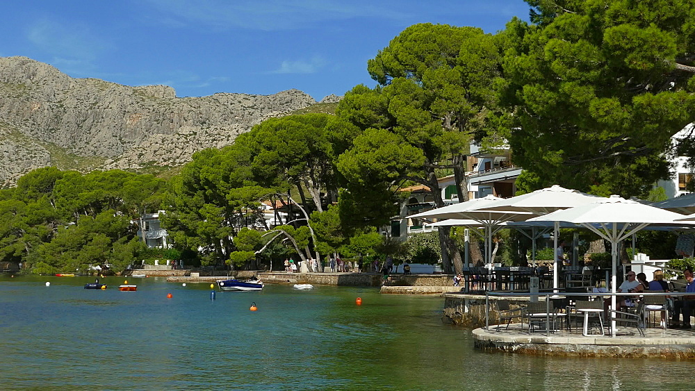 Pine Walk in Puerto Pollenca, Mallorca, Balearic Islands, Spain, Mediterranean, Europe