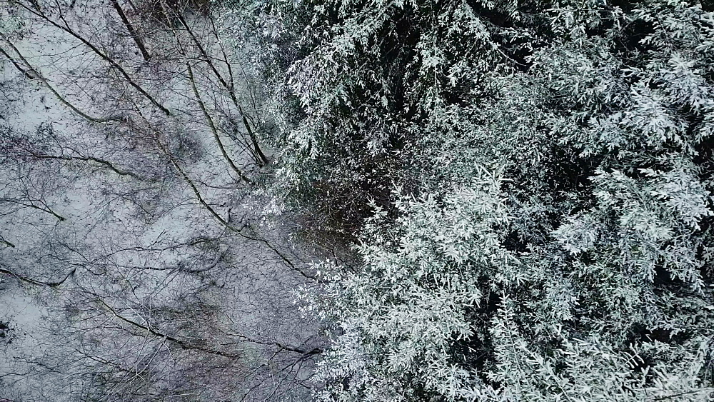 Drone view of forest in winter, Saarburg, Rhineland Palatinate, Germany, Europe - 396-10736