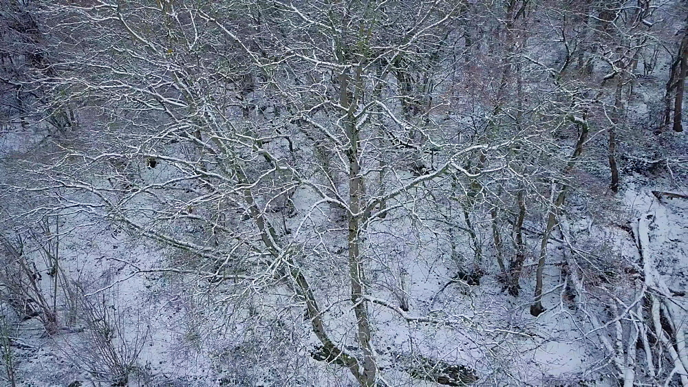 Drone view of forest in winter, Saarburg, Rhineland Palatinate, Germany, Europe - 396-10739