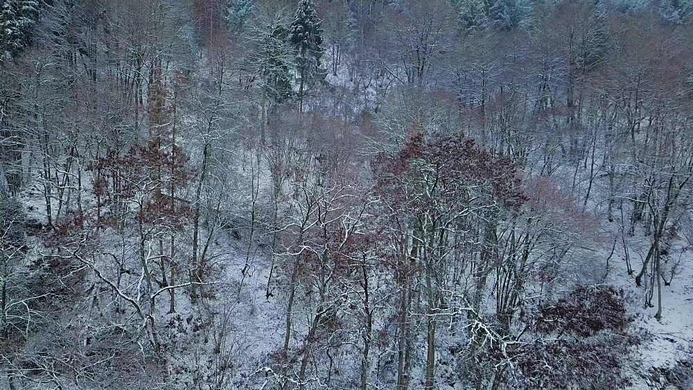 Drone view of forest in winter, Saarburg, Rhineland Palatinate, Germany