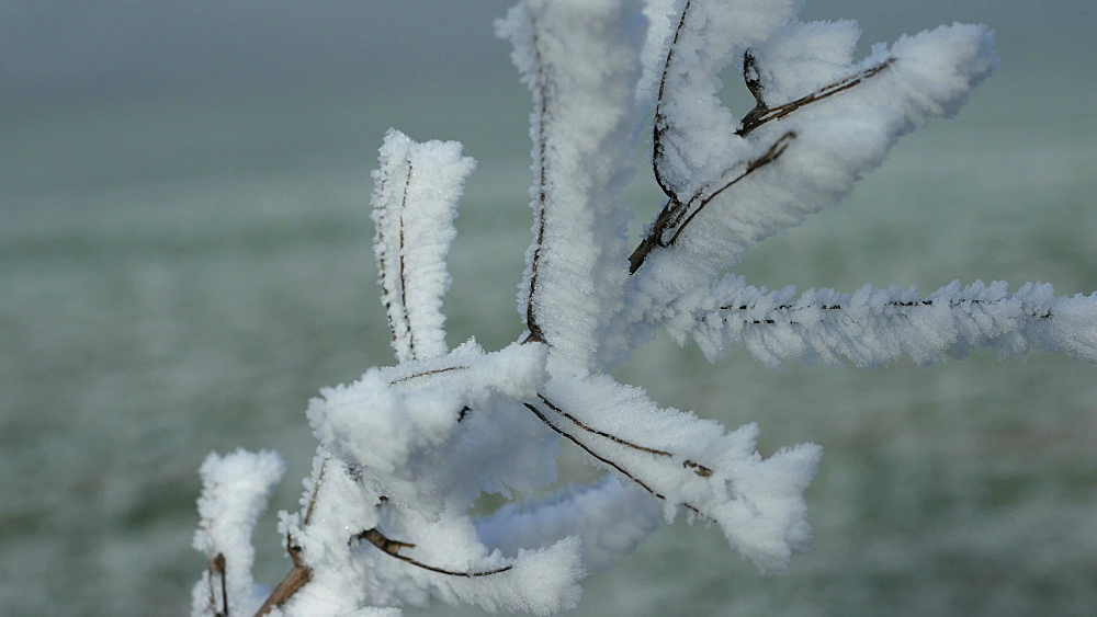Hoar frost on branches, Saargau near Kirf, Rhineland Palatinate, Germany, Europe