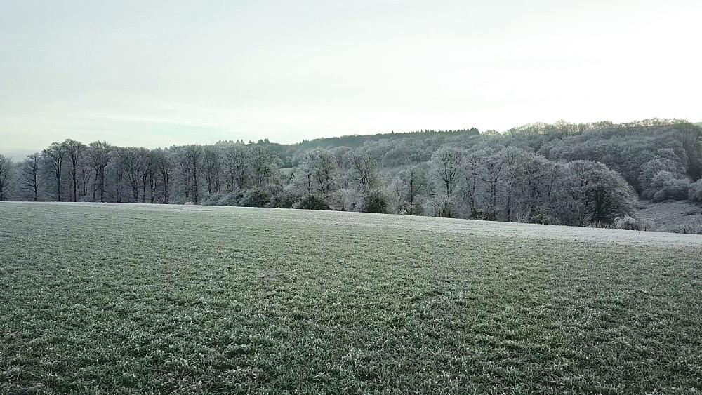 Drone view of forest in winter, Saargau near Kastel-Staadt, Rhineland Palatinate, Germany, Europe