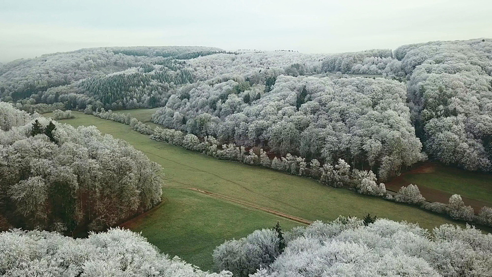 Drone view of forest in winter, Saargau near Kastel-Staadt, Rhineland Palatinate, Germany