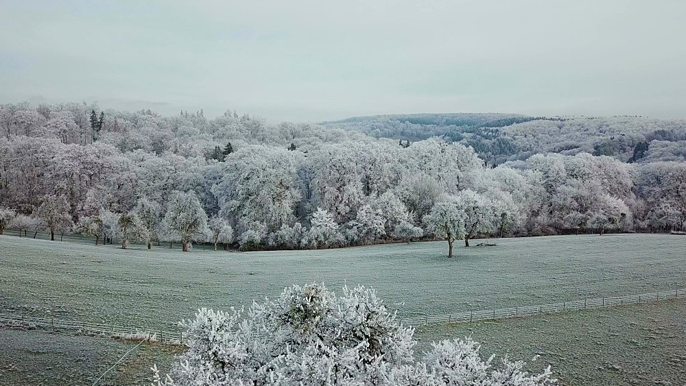 Drone view of forest in winter, Saargau near Kastel-Staadt, Rhineland Palatinate, Germany, Europe