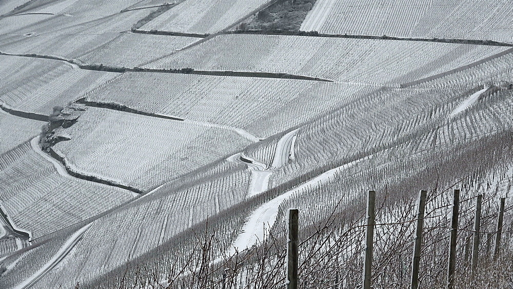 Vineyards near Piesport in winter, Moselle River, Rhineland-Palatinate, Germany, Europe - 396-6051