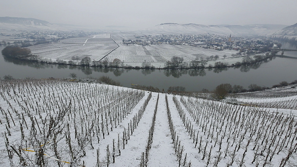 Wine village of Trittenheim in winter, Moselle River, Rhineland-Palatinate, Germany, Europe - 396-6054