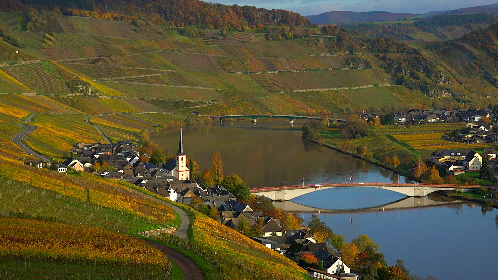 Wine village, Piesport, Moselle River, Rhineland-Palatinate, Germany, Europe - 396-6245