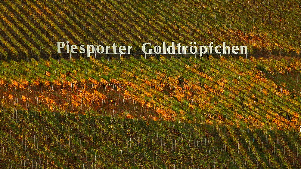 Vineyard near Piesport, Moselle River, Rhineland-Palatinate, Germany, Europe - 396-6252