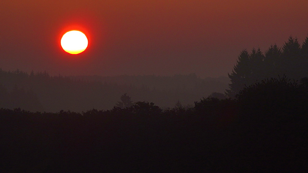 Sunrise over woodland, Eifel, Rhineland-Palatinate, Germany, Europe - 396-6310