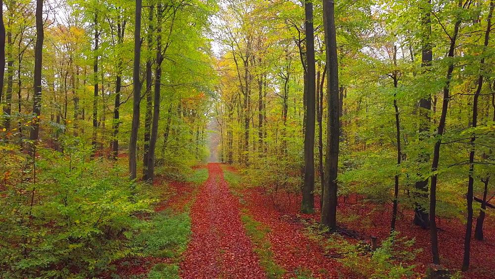 Flight through an autumn beech forest - 396-7706