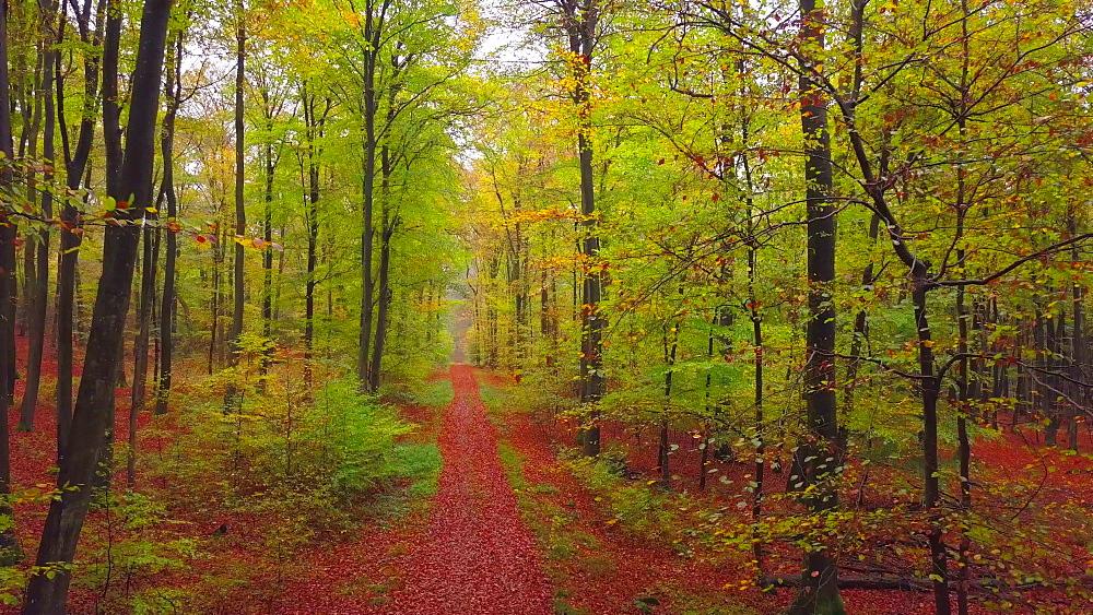 Flight through an autumn beech forest - 396-7707