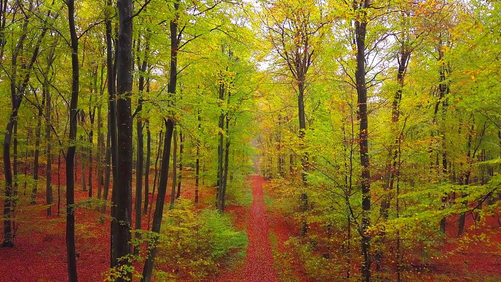Flight through an autumn beech forest - 396-7708