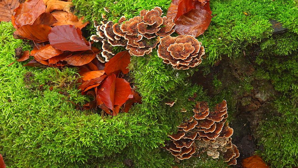 Tree fungi on the tree trunk - 396-7722