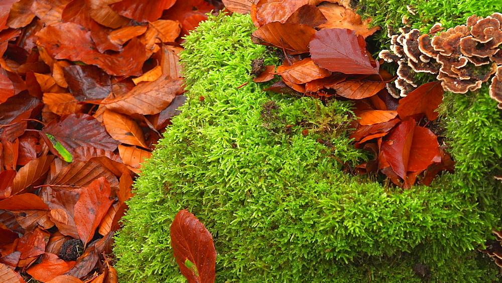 Tree fungi on the tree trunk - 396-7723