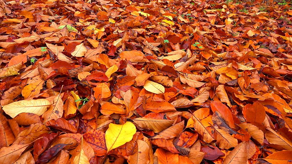 Autumn leaves - 396-7724