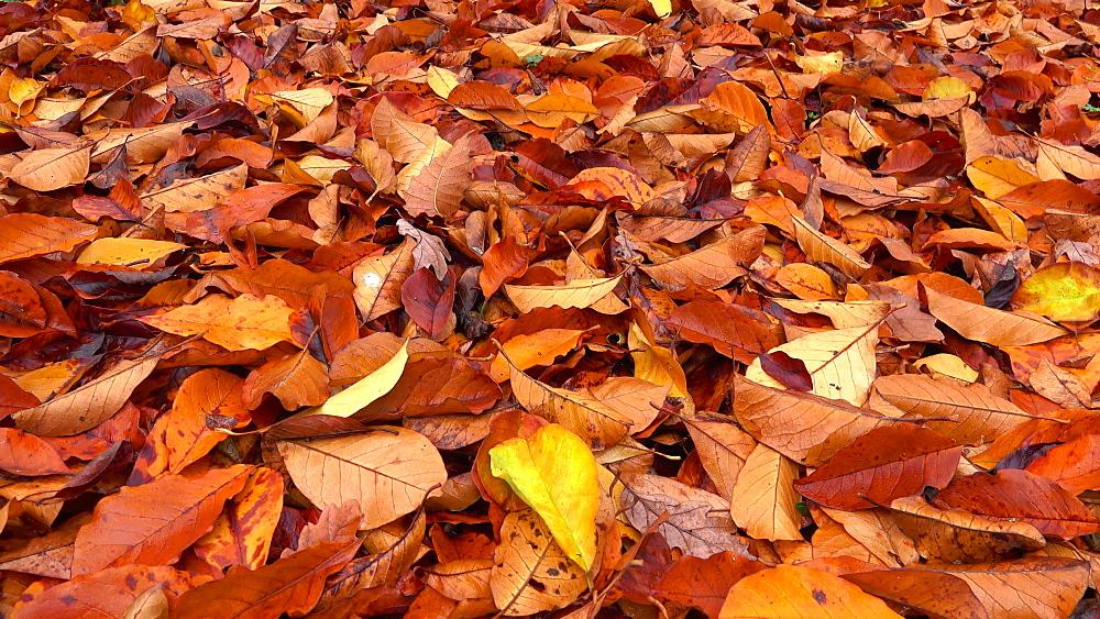 Autumn leaves - 396-7725